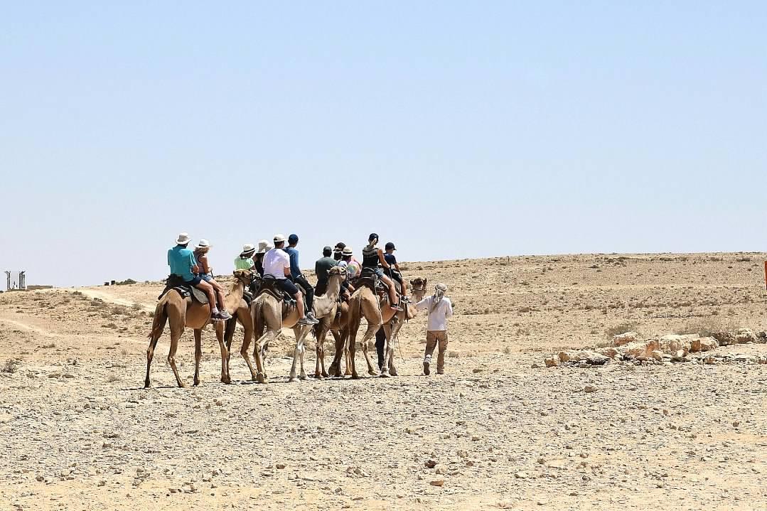 IMG ISRAEL CAMELS IN DESERT.jpg