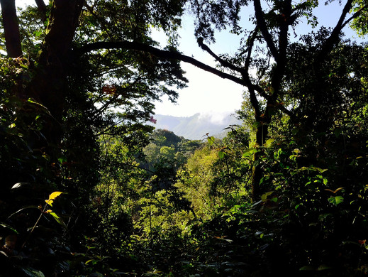 Forest and Jungle Tracking