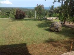 Rasen nach 2 Wochen