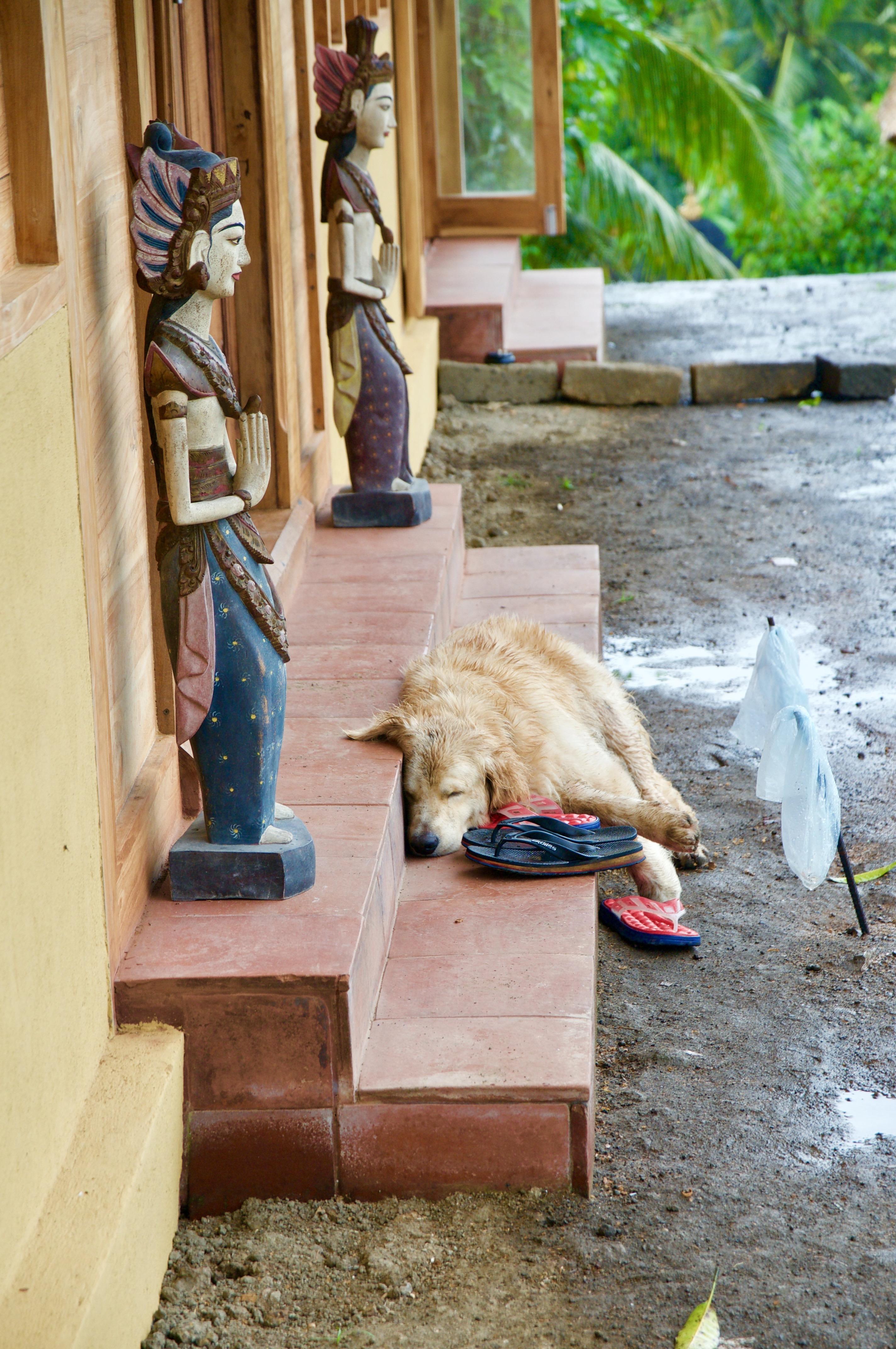 Vom Regen erschöpft