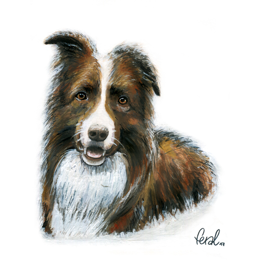Border-Collie_k