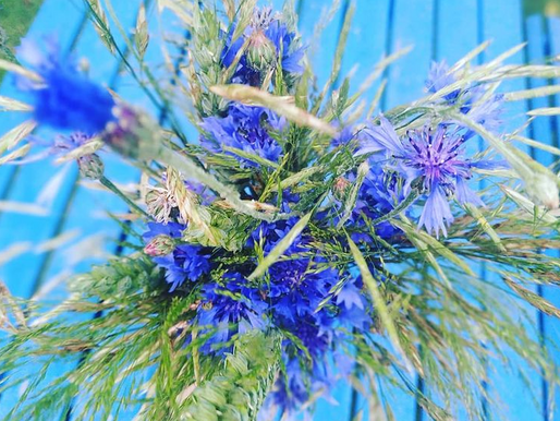 Rugiagėlių ekstraktas [Centaurea cyanus ekstraktas]