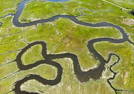 salt marsh edit 2.jpg