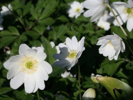 Wildflower Challenge: Lancashire