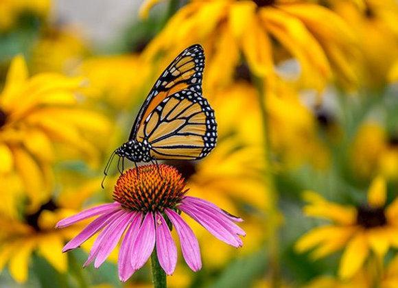 Monarch Plant Kit