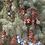 """Thumbnail: Spruce (White) 7 - 15"""" /  2-2TP*"""