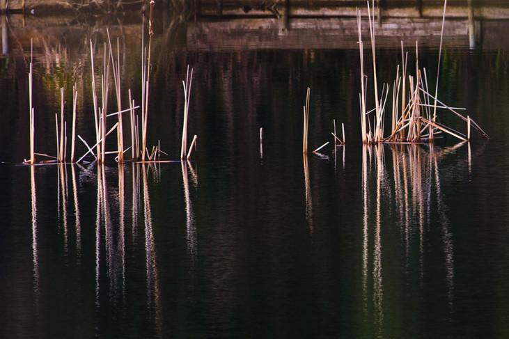 Just Reeds