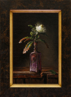 Banksia Anatona, Dryandra anatona