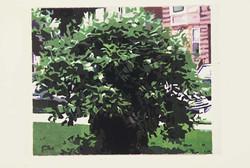 Side walk shrub