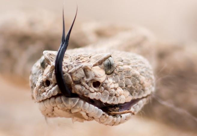 Rattlesnake - Jungle Roots Children's Dentistry