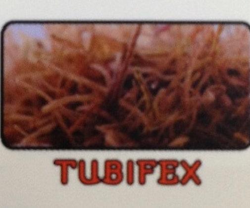 Tubifex (Frozen Blister Pack)