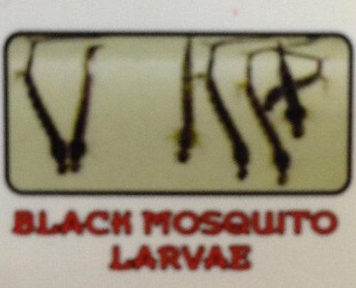 Black Mosquito Larvae (Frozen Blister Pack)