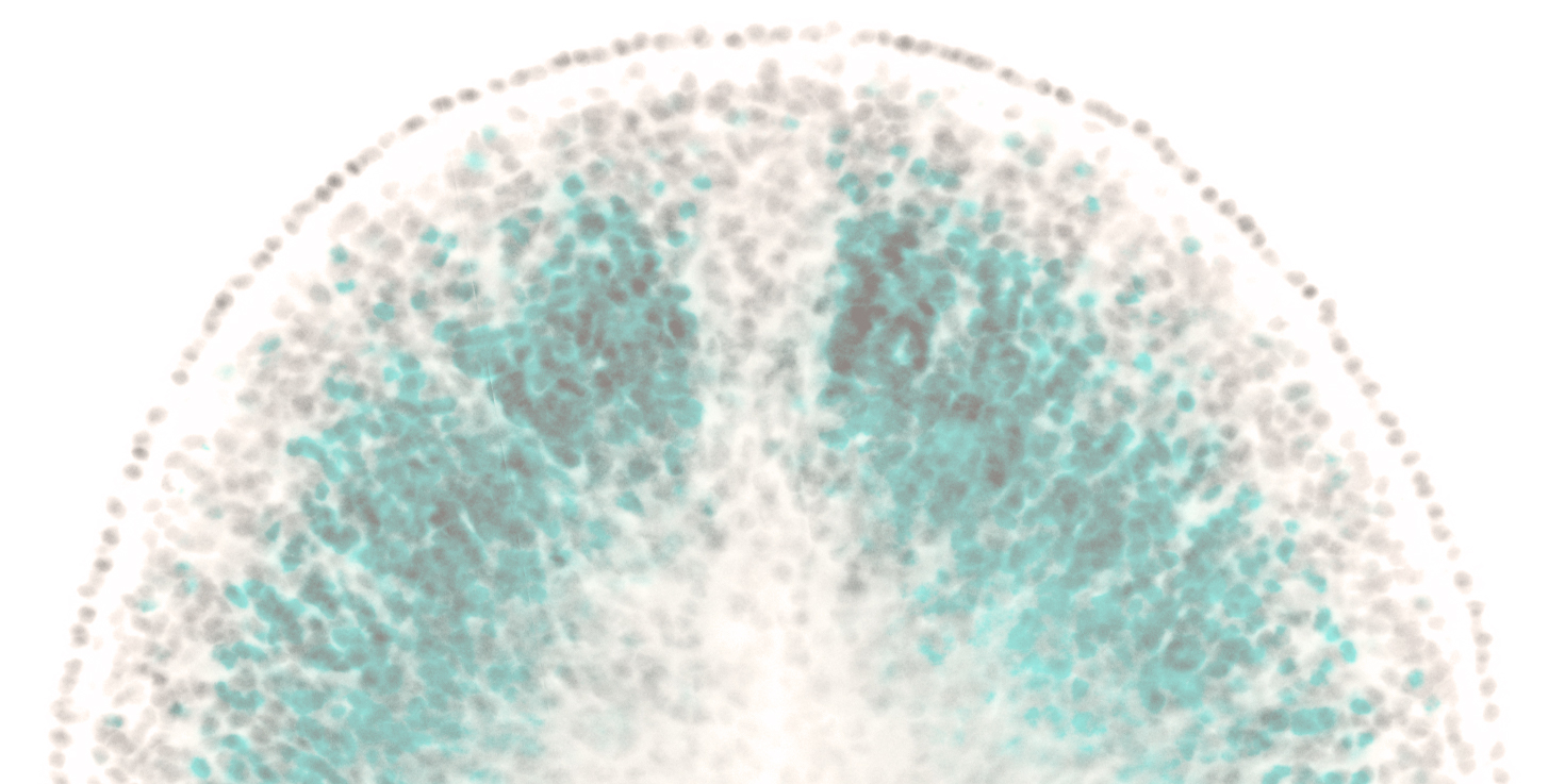 Imgae_chat_DAPI_inverted