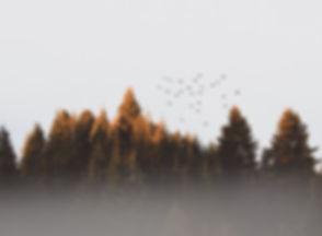 flock-of-birds-917494.jpg