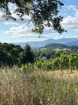Vineyard view of Alexander Valley