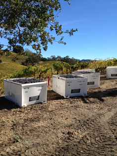 Vineyard owl box & grape bins