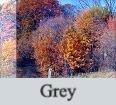 Grey_edited.jpg