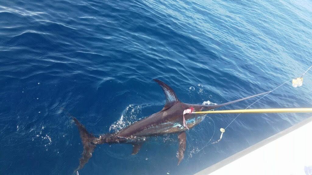 10 Hour Swordfish Trip
