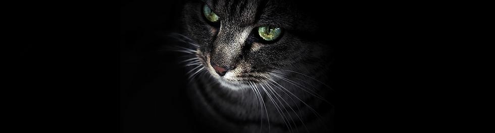 portada gato.png