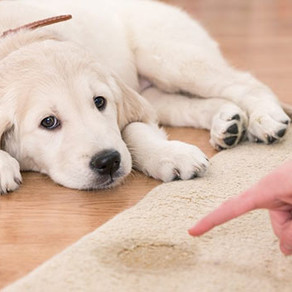 How To Clean After Pets