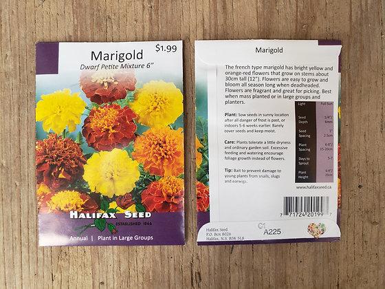 """Marigold - Dwarf Petite Mixture 6"""""""