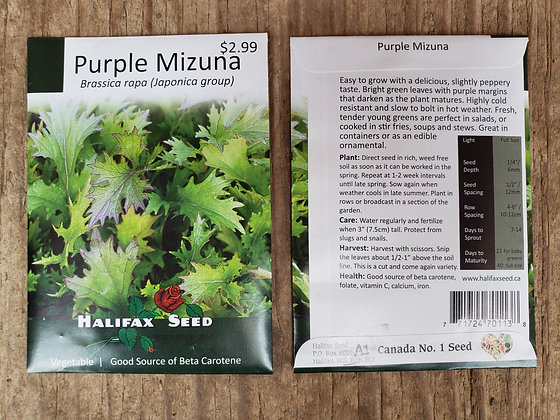Purple Mizuna - Brassica rapa (Japonica group)