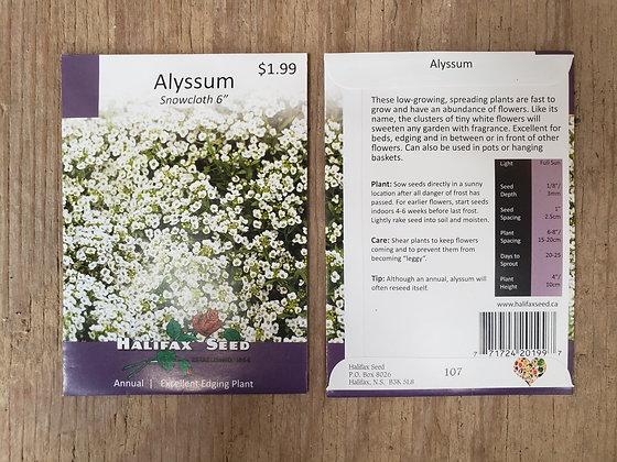 """Alyssum - Snowcloth 6"""""""