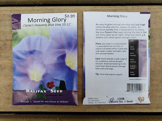 Morning Glory - Clark's Heavenly Blue Vine 10-12'