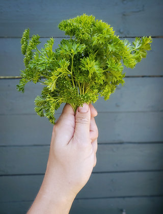 Fresh cut parsley (curly)