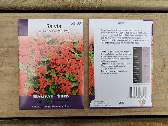 """Salvia - St. John's Fire 10-12"""""""