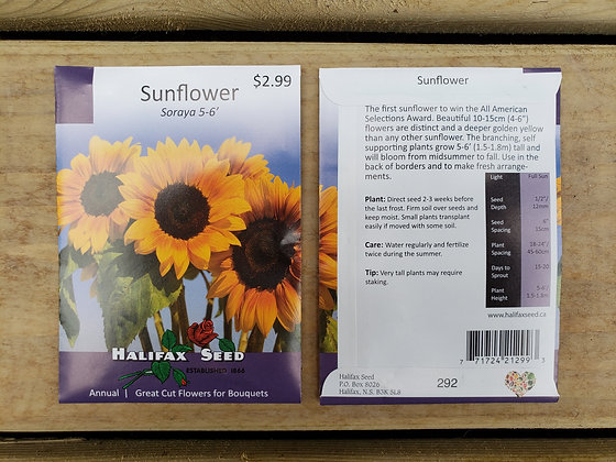 Sunflower - Soraya 5-6'