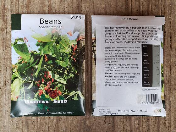Beans - Scarlet Runner
