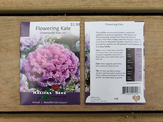 """Flowering Kale - Ornamental Kale 16"""""""