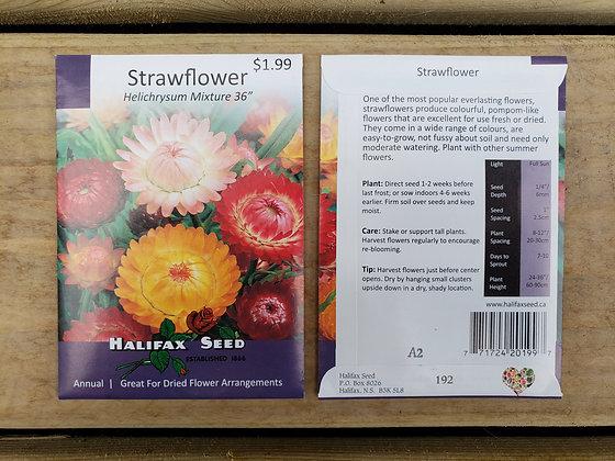 """Strawflower - Helichyrsum Mixture 36"""""""