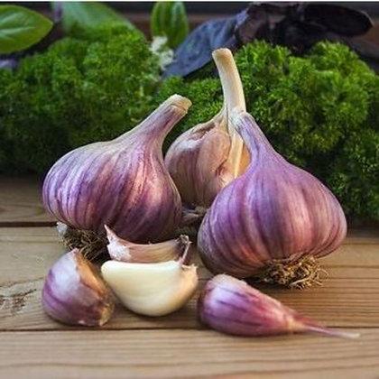 Garlic - Marbled Purple Stripe