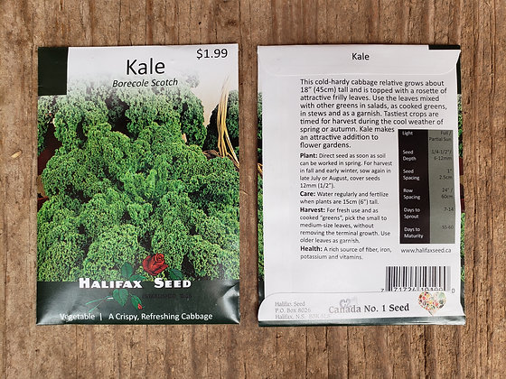 Kale - Borecole Scotch