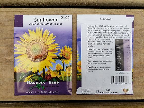 Sunflower - Giant Mammoth Russian 8'