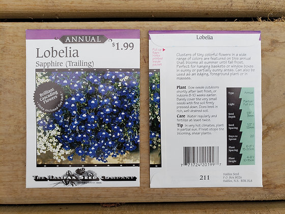 Lobelia - Trailing Sapphire