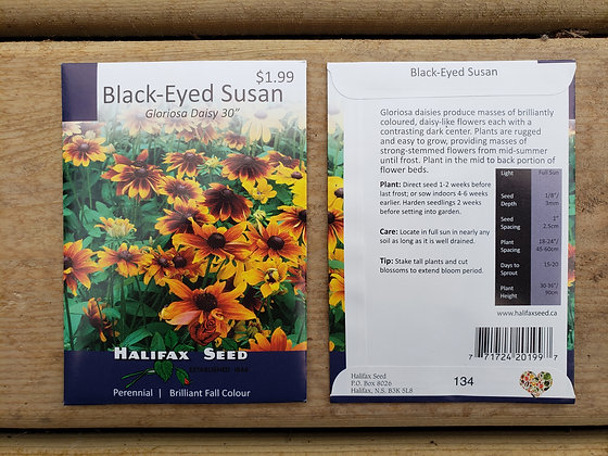 "Black-Eyed Susan - Gloriosa Daisy 30"""