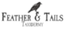 Feather & Tails Taxidermy
