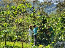 ruta del cafe aroma xicotepec