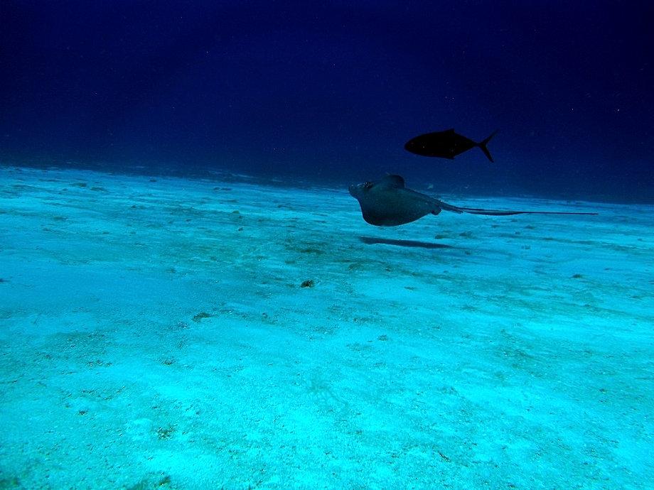 Best dive shop in cozumel aqua safari scuba diving in - Cozumel dive sites ...