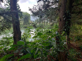 Aroma Xicotepec Cabañas y Camping