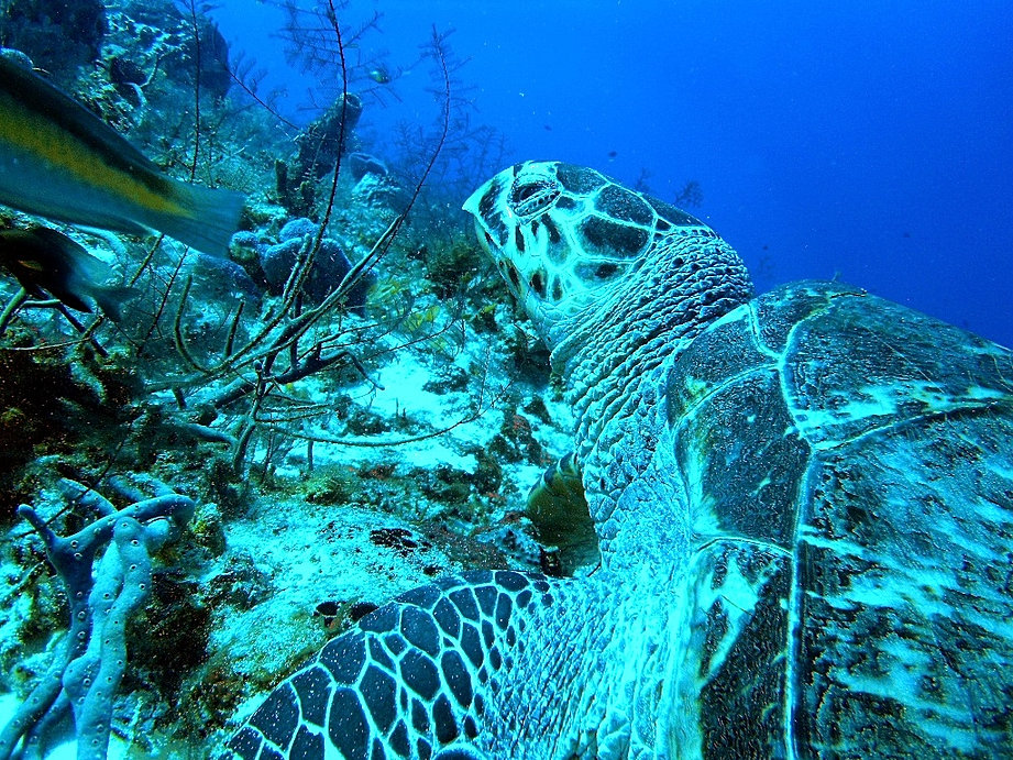 Diving in cozumel image gallery - Cozumel dive sites ...