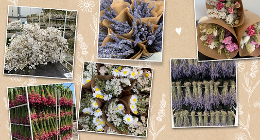 homepage_dried_flowers newsletter.png