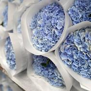 hydrangea_blauw.jpg
