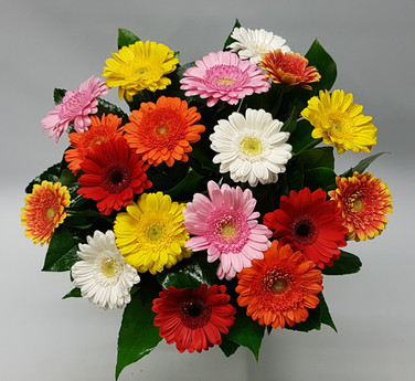 Mixed-gerbera.jpg