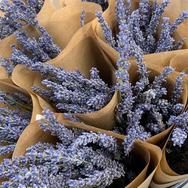 Lavendel_paars.png