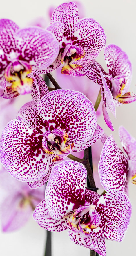 BC Orchids new_customer.jpg