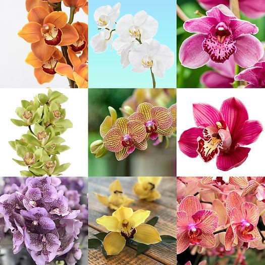 BC Orchids_9 luik_02.jpg